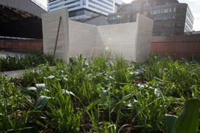 Rebecca Smith - London - nature studio - mindfulness - gardening therapy – garden design– gardening - horticulture – nature