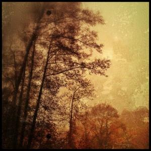 post oct 2014 autumn trees
